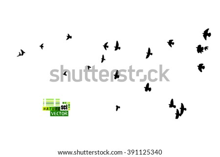 Flying birds in the sky. Vector - stock vector