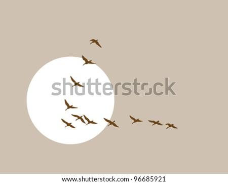 flying ducks silhouette on solar background, vector illustration - stock vector