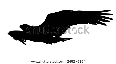 Flying eagle  vector silhouette