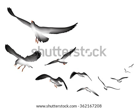 flying seagulls vector Illustration isolated on white background - stock vector