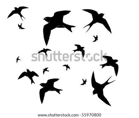 Flying swallows on a white background