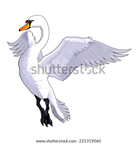 Flying Swan Stock Photos, Images, & Pictures | Shutterstock