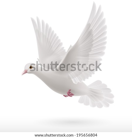 Flying white dove on white background as symbol of peace - stock vector