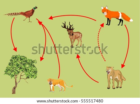 Food-chain Stock Images, Royalty-Free Images & Vectors | Shutterstock
