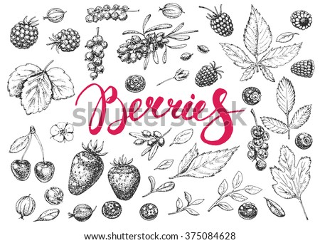 Food hand drawn vector elements. Berries. Vitamins. Vintage illustration. Engraving. Healthy food. Strawberry, cherry, raspberry, blackberry, gooseberry, buckthorn, cranberry, blueberry. Sketch.