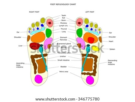 foot reflexology chart with the main point to be massaged