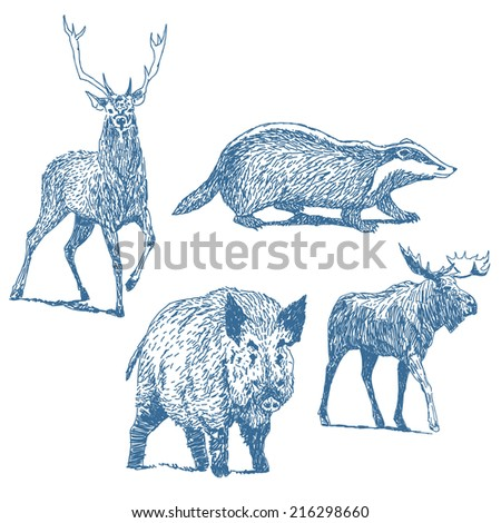 Forest animals drawings set isolated on white background: deer, badger, boar, moose - stock vector