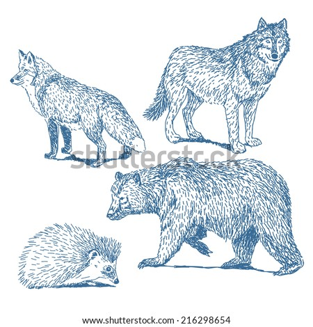 Forest animals drawings set isolated on white background: fox, wolf, hedgehog, bear - stock vector