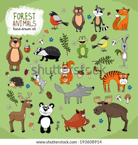 Forest Animals large set hand-drawn illustration with a wolf  fox  bears  panda  owl  raccoon  tiger  bunny  hedgehog  moose  deer  warthog  badger  squirrel  frog and birds - stock vector