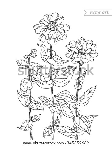 forest aster flowers chrysanthemum vector zentangle coloring book page for adults