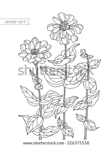 Forest aster flowers, chrysanthemum. Vector. Zentangle. Hand drawn artwork. Bohemia concept for wedding invitation, card, tickets, congratulations, branding, logo, label. Coloring book page for adults - stock vector