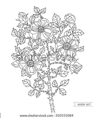 Forest dog rose plant. Botanical vintage vector. Zentangle. Coloring book page for adult. Hand drawn artwork. Bohemia concept for wedding invitation card, ticket, branding, logo label. Black and white - stock vector