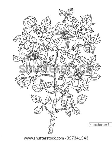 Thorn Vine Coloring Pages