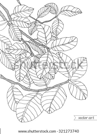 Forest exotic jungle plant ficus tree, bush, branch with leaves. Vector. Hand drawn artwork. Bohemia concept for branding, logo, label. Coloring book page for adult. Black and white - stock vector
