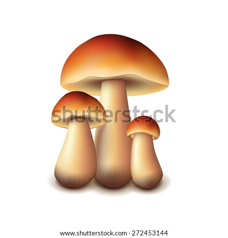 Forest mushrooms isolated on white photo-realistic vector illustration - stock vector