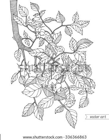forest tree branch with leaves wild berries vector hand drawn artwork zentangle