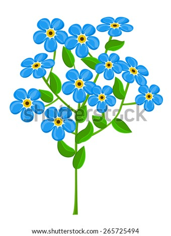 forget-me-nots isolated on white background, vector illustration - stock vector
