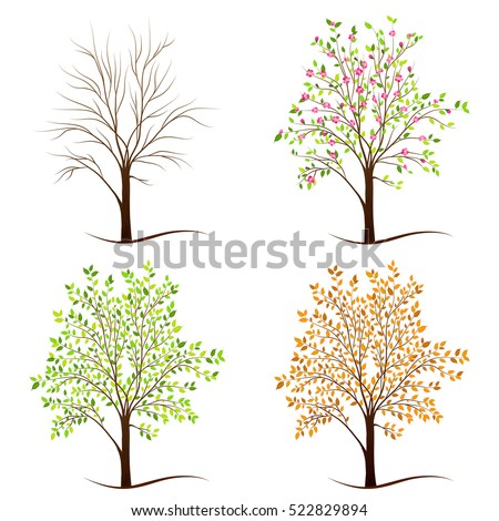 Four seasons trees vector