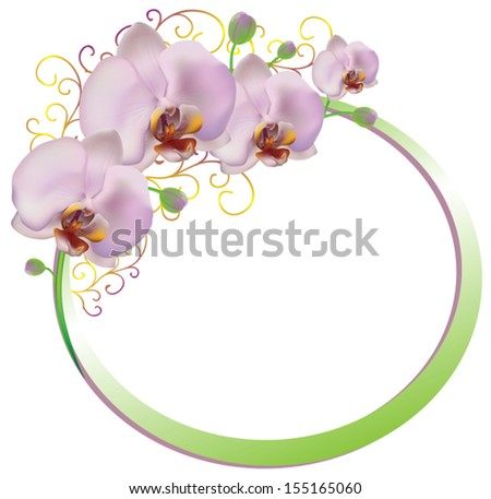 Frame of pink orchids isolated on white background, vector - stock vector