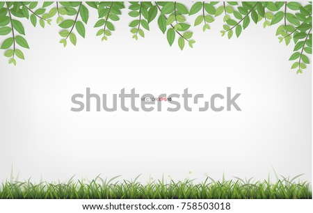 framing of green leaves and green grass with white area for background natural abstract background - Natural Frame