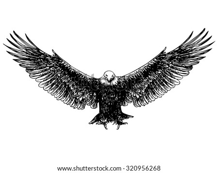 freehand sketch of flying eagle hand drawn on white background - stock vector