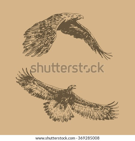 Freehand sketch of flying eagle. Hand drawn sketch. Vector illustration  - stock vector