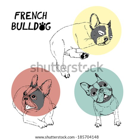 FRENCH BULLDOGS ILLUSTRATED ON WHITE BACKGROUND - stock vector