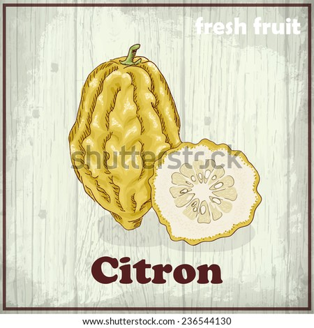 Fresh fruit sketch background. Hand drawing illustration of citron - stock vector