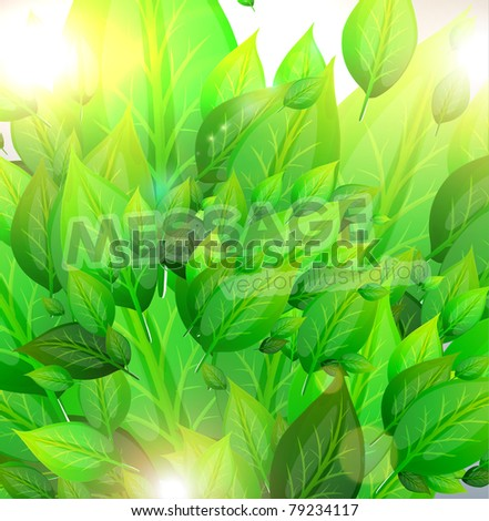 fresh green leaves background and sun shine for summer design - stock vector
