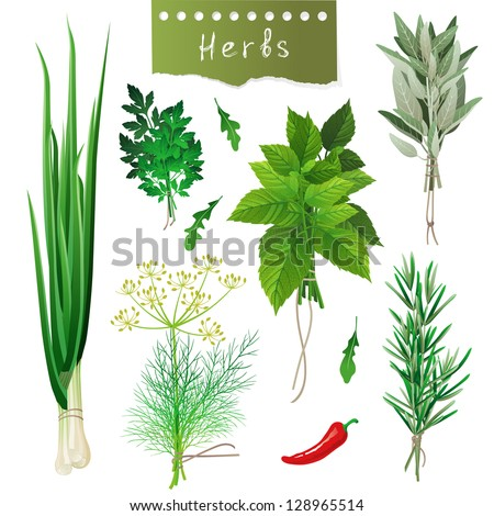 Fresh herbal bunches over white background. EPS 10 - stock vector