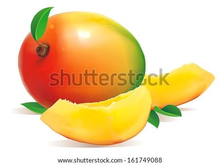 Fresh Mango with slice Isolated On White Background. Vector illustration