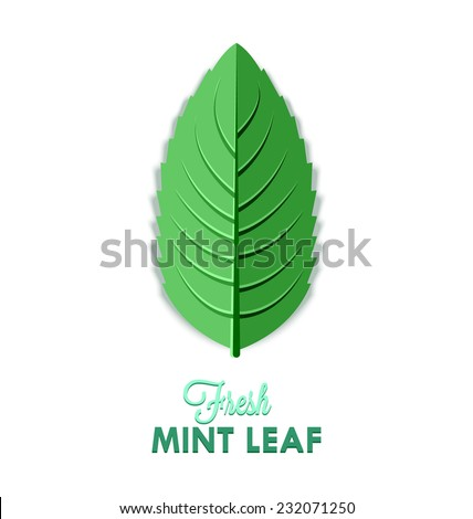Fresh mint leaf isolated on white background - stock vector
