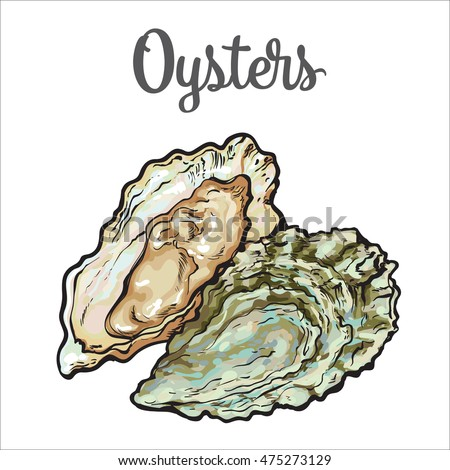 how to draw an oyster shell