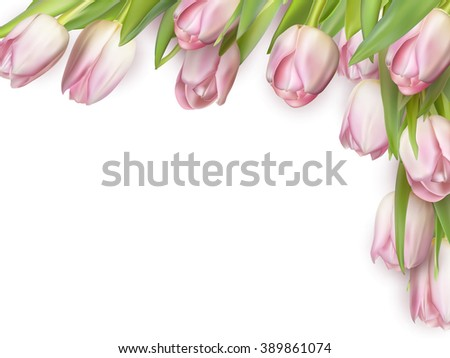 Fresh pink tulips isolated on white, top view. EPS 10 vector file included