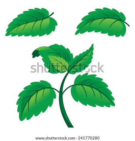 Fresh raw mint leaves isolated on white background - stock vector