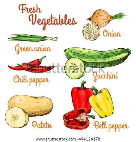 Fresh raw vegetables. Green onion, bulb onion, chili pepper, zucchini, potato and bell pepper. Isolated set on a white background with inscriptions