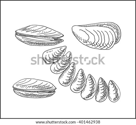 Fresh seafood mussel clam in shell hand drawn sketch vector illustration.