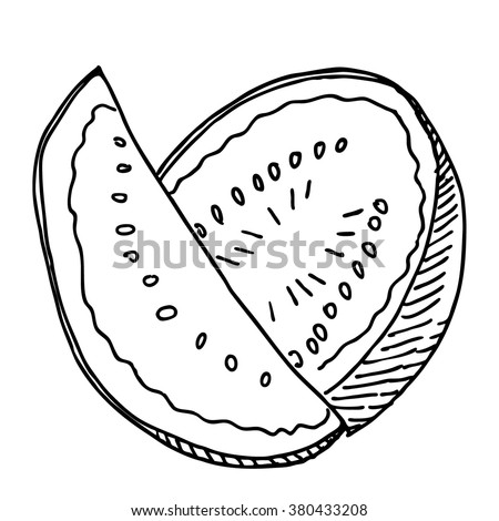Fresh sweet  melon or watermelon food sketch  drawing. Vintage line style illustration. 