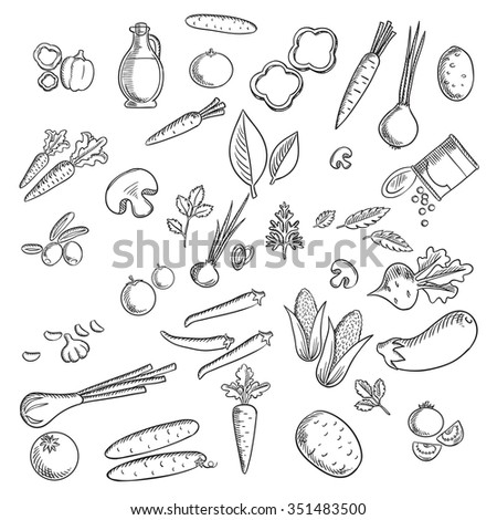 Fresh vegetables and herbs sketches set with tomato, carrot, onion, cucumber, mushroom, potato, corn, chilli and bell pepper, olives, eggplant beet green pea garlic herbs and olive oil - stock vector