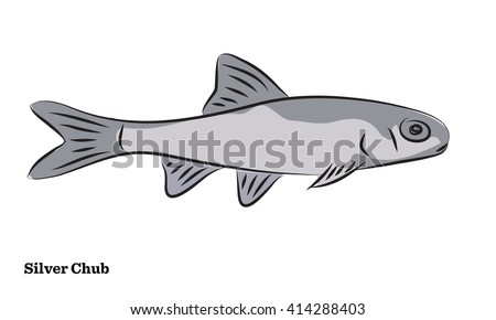 Freshwater fish illustration
