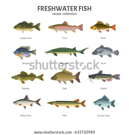 Freshwater fish set vector illustration different stock for Types of white fish to eat