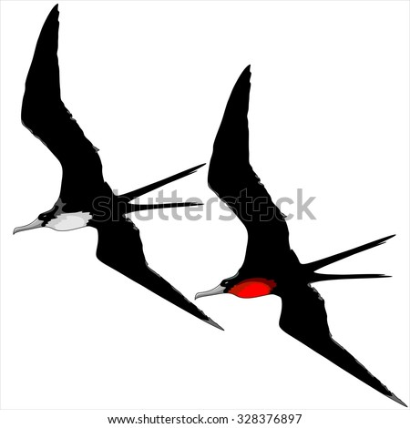 Frigate Birds Male and Female