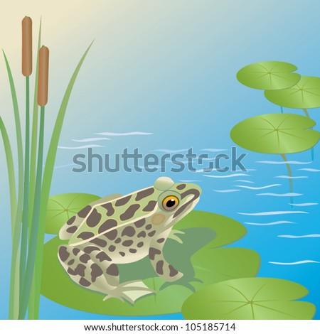 frog - stock vector