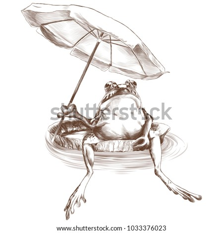 Frog Line Drawing Stock Images Royalty Free Images