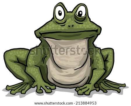 Frog, vector illustration