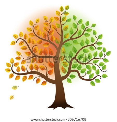 From summer to autumn tree with green and yellow leaves