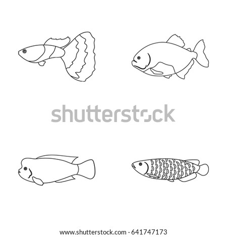 frontosa cichlid phractocephalus hemioliopterusfish set collection icons in outline style vector symbol