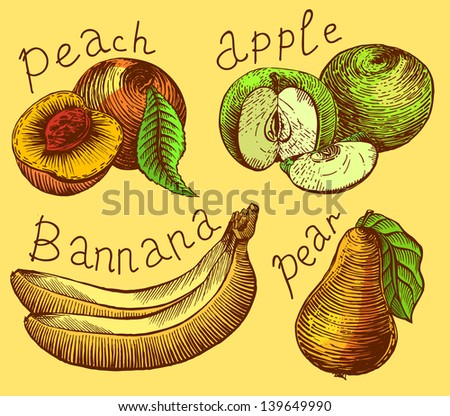 fruit - stock vector