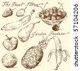 fruit doodles - stock vector