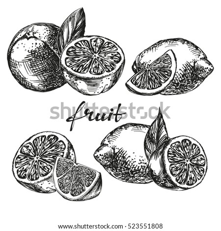 fruit orange, lemon and lime set hand drawn vector illustration realistic sketch
